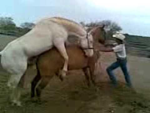 cruza de caballo albino