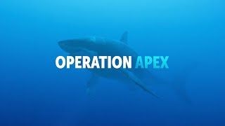 Announcing: Operation Apex, a room-scale VR Adventure with Sharks!