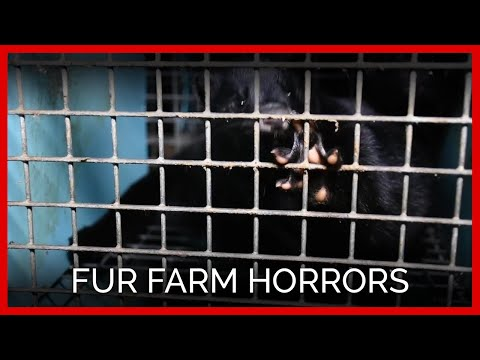 Xxx Mp4 Cesspools Crawling With Maggots And Other Fur Farm Horrors 3gp Sex