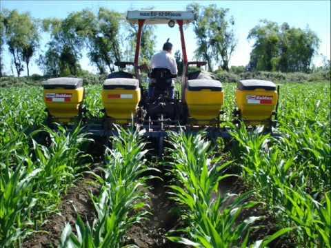 La producción de maíz Agricultura Coironal Yerbas Buenas Linares Chile.