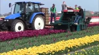 Awesome flower machine - new heavy technology machine - best agricultural farming