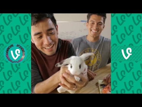 The Best Magic Tricks Of 2016 | NEW Best Zach King Magic Show Ever