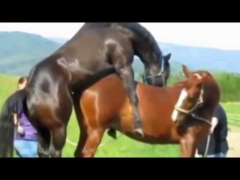 Xxx Mp4 Funny Animal Make Love Love Clips Funny Compilation 2014 Video Funny Love 3gp Sex