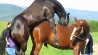 funny animal make love | love clips | funny compilation 2014 |video funny love