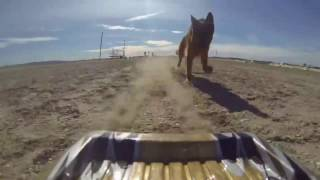 Dog chases Grand Tour Trio