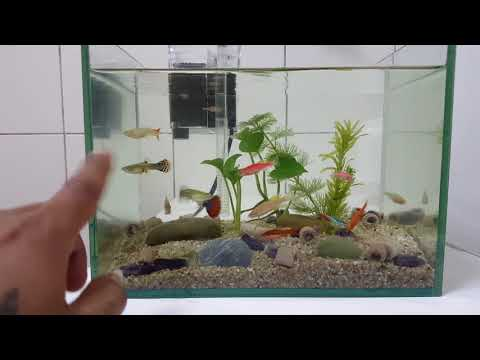 Xxx Mp4 Cara Aman Untuk Ikan Guppy Beranak 3gp Sex