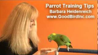 Parrot Training Tips - The Benefits of Trick Training