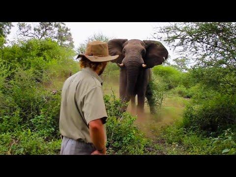 Man Scares Away Charging Elephant