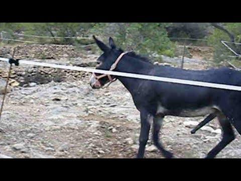 Xxx Mp4 Donkey Mating Burros Apareándose 3gp Sex
