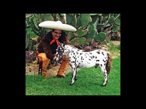 vicente fernandez caballo golondrino