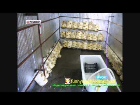 Помещение своими руками для выращивания грибов