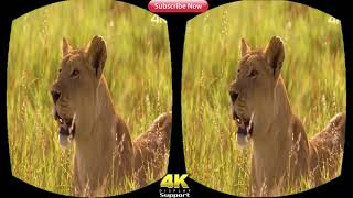 VR Nature & Animal 3D Movie (RED-CYAN ANAGLYPH 3D) HD VIDEO