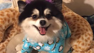 Woman Leaves Nephew Detailed List to Dog Sit Her Pomeranian