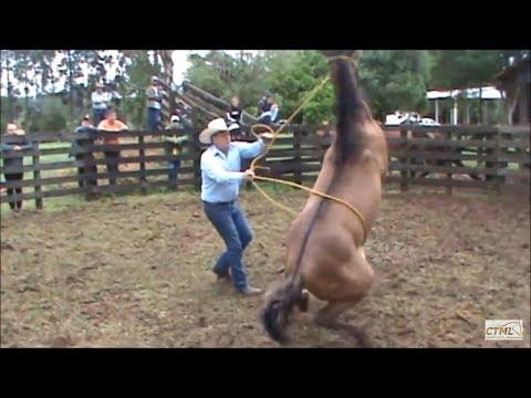 Doma Racional Cavalo Xucro no Paraná