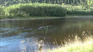 The largest Gaula Salmon 2014 caught on fly - take, fight, landing and release by Manfred Raguse