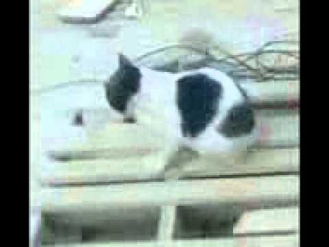 malir cat sex .3gp