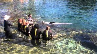 Christina and the Girls swimming #2