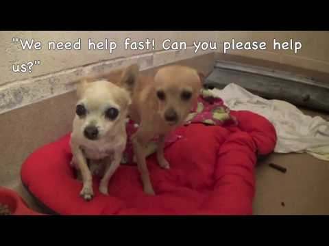 Please Help Save Two Tiny Shelter Dogs Hailey and Lada ASAP!