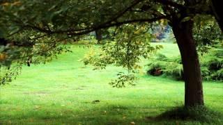 Shedin Dujone | Tagore Song 05 | Relaxing Piano Music |