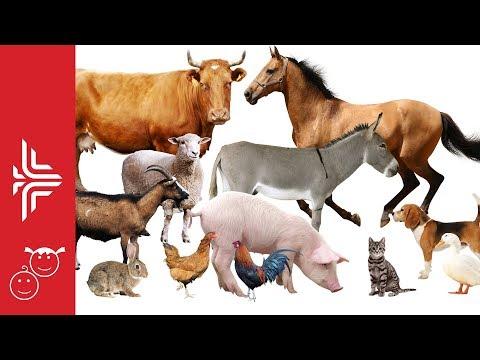 Kafshët shtëpiake