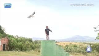 Percilio mostra o voo treinado de Fênix no Parque dos Falcões