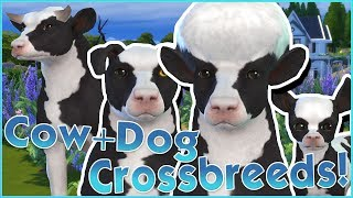 Creating Cow+Dog Crossbreeds?! 🐱🐶 Sims 4: Cats & Dogs