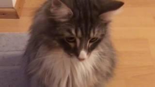 Wunderschöne Troll-Katze Diego