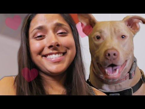 7 Signs It s Time To Get A Dog