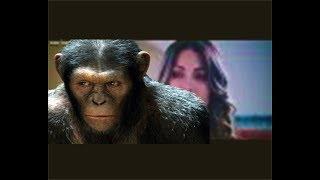 فيلم اجنبى رائع   فيلم عن قصة حقيقية لشامبانزى ينقذ حياة انسان   nor aflam