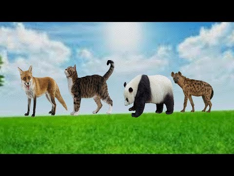 wrong heads of zoo wild safari Learn Colors Zoo Wild Safari Animals Funny Wrong Heads Body Video for