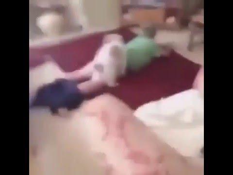 Xxx Mp4 Bro Lets Dog Hump His Fgt Ass Jojo Edit 3gp Sex
