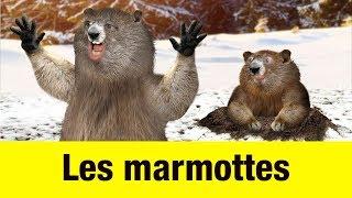 Les marmottes - Têtes à claques