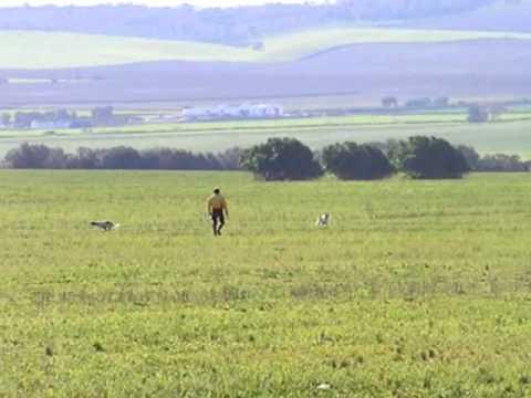Big Jim Setter Inglese Spagna 2005