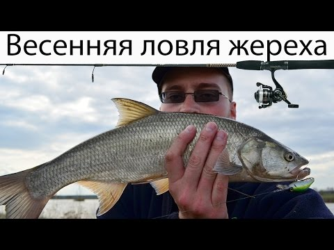 река горынь рыбалка видео