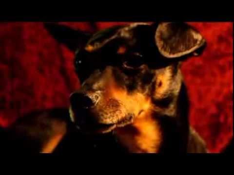 Xxx Mp4 Tobi My Perfect Dog ♥ Radioactive 3gp Sex