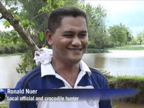 O maior crocodilo do mundo Vídeo VEJA