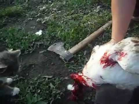 Meanwhile in the Ukraine .WARNING GRAPHIC