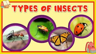 Learn About Different Type Of Insects - Preschool Learning For Kids - Educational Video For Children
