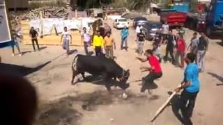 مصارعة الثيران في أسبانيا , نقلت لبورسعيد