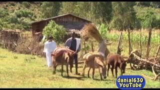 Worku Andualem - Aynama - New Ethiopian Music 2016 (Official Video)