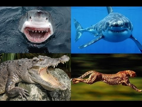 Nat Geo wild Most Dangerous Animals National Geographic Documentary