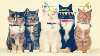 Słodkie zdjęcia kotów.