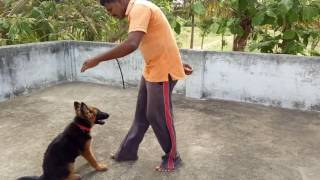 My dog training