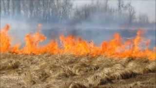 Grosse Isle Prairie Prescribed Burn