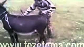 Iki essek Mirt Prikol 2014