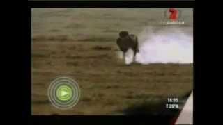 Gacela e impala Vs Guepardo