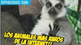 Los Animales Mas Raros de Internet! #whatdafaqshow