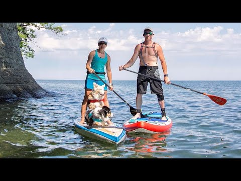 Xxx Mp4 Owner Takes Dogs Paddleboarding Around USA 3gp Sex