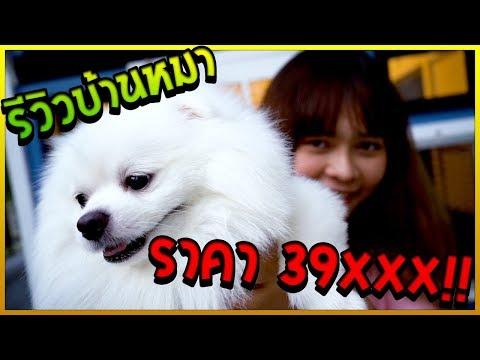 Xxx Mp4 พี่ขวัญพาดูบ้านหมาฟูจิ ราคา 39 XXX บาท 3gp Sex
