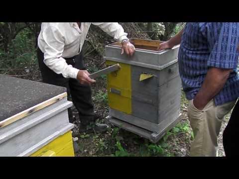 Пчеловодство. У С� исаря В.Д � а пасеке.Часть 5
